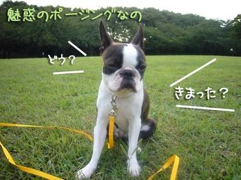 Yuzu2_2