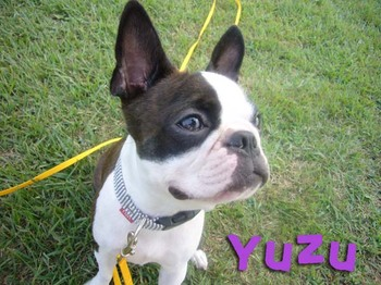 Yuzu_6