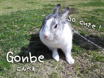 Gonbe2_3