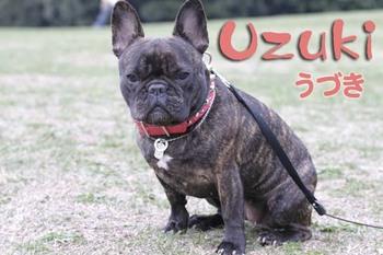 Uzuhiyo_1