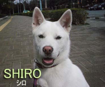 Shiro_2